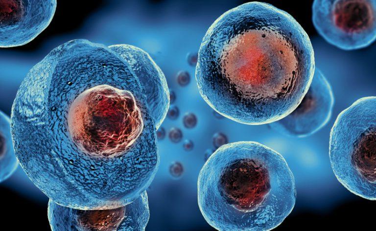 cellule-staminali-768x472
